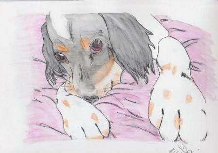 Hund Denise