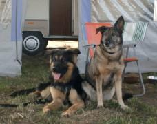 Seehof - Tiffi und Rocky