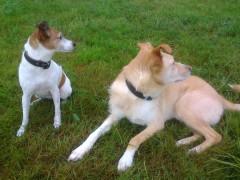 Mit 'Klick' zur Petition: Abschaffung des gemeinen Hundehalters