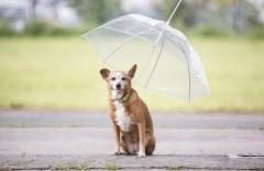Mit 'Klick' zum Hunde-Regenschirm