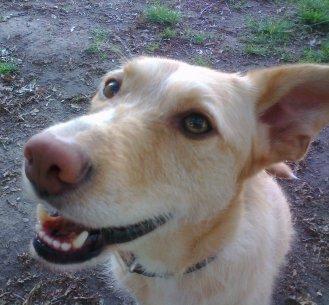 Gutelauneeinohrhund