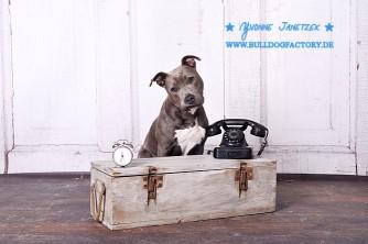 Amy Telefon