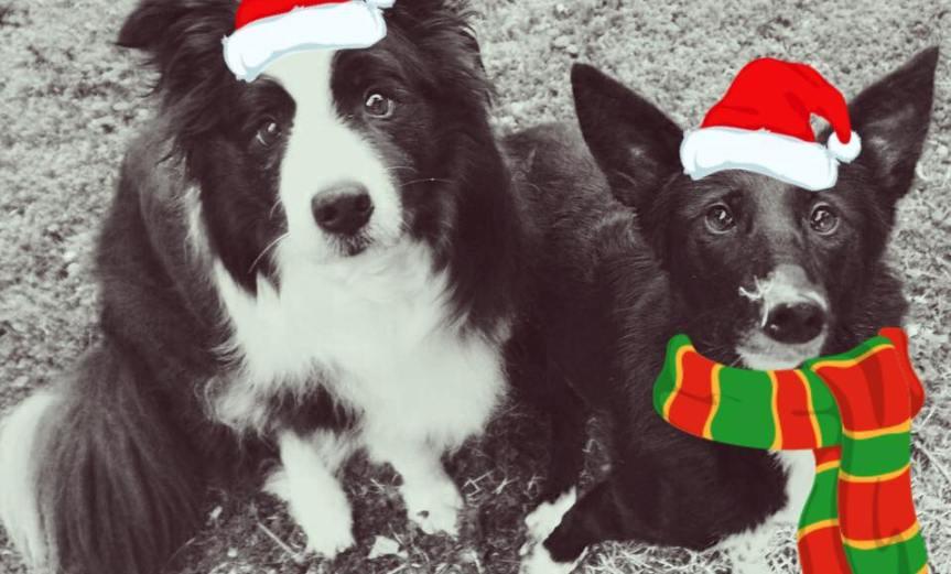 Skipper und Fizz - Inkas Weihnachtselfen