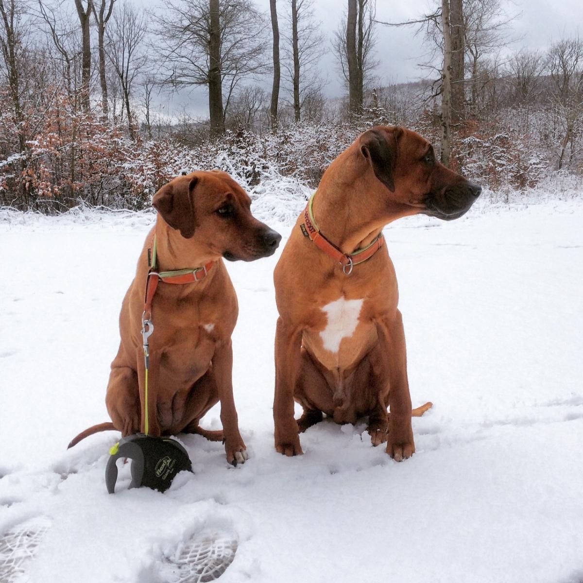 Weihnachten mit Hund ... von Martina Züngel-Hein