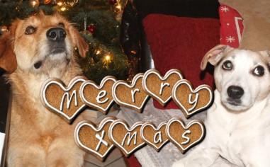 Frohe Weihnachten von Lucy und Leo