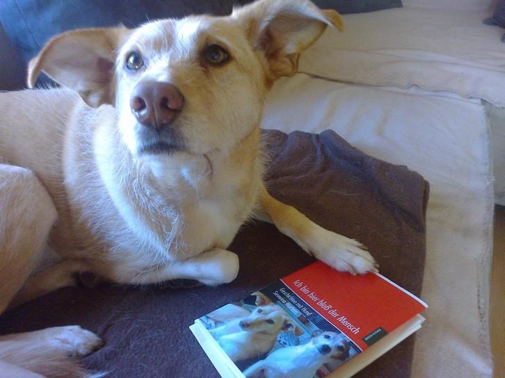 Milow staunt über Buch