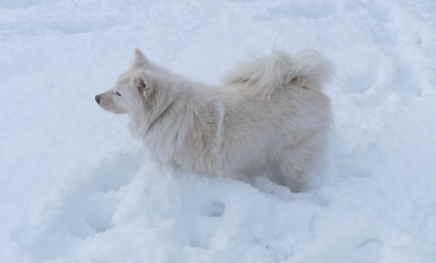 Thomas Riepes Hund Koka ist es egal, ob Weihnachten oder Silvester ist. Geknuddelt wird sie immer...
