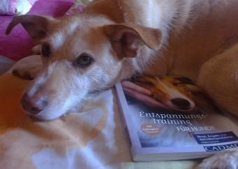 Freiling - Milow Buch - entspannt