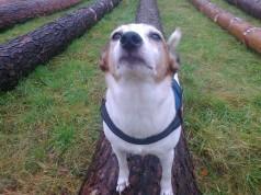 Luna auf dem Baumstamm 2