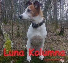 Luna Kolumna2