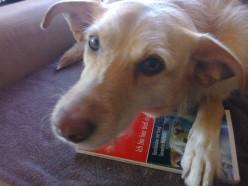 Milow - Das ist mein Buch
